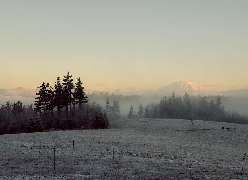 January morning