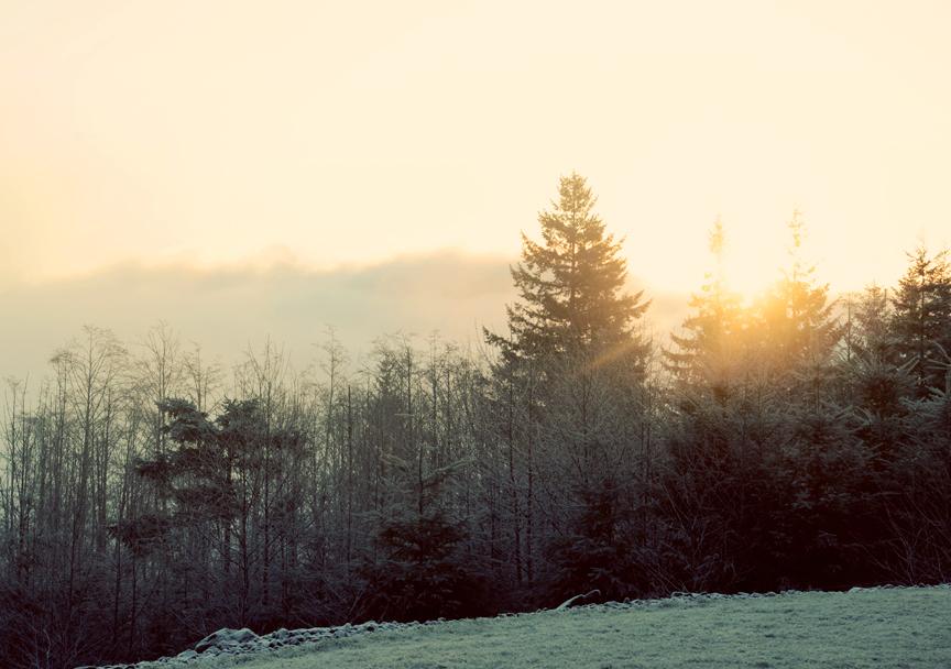january morn