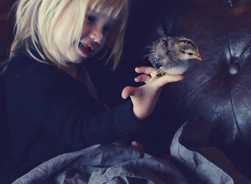 Hazel and chicken